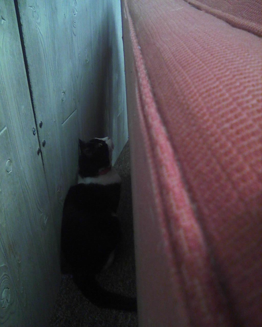 cat hiding behind couch