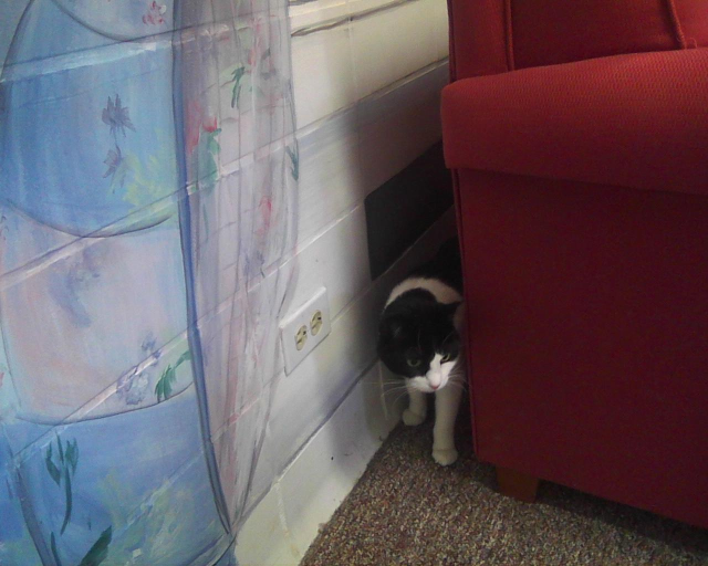 black and white cat behind couch