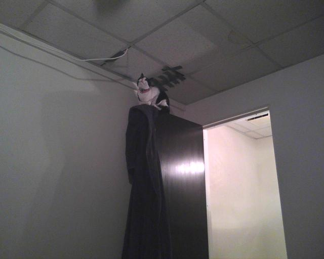 cat on top of a door