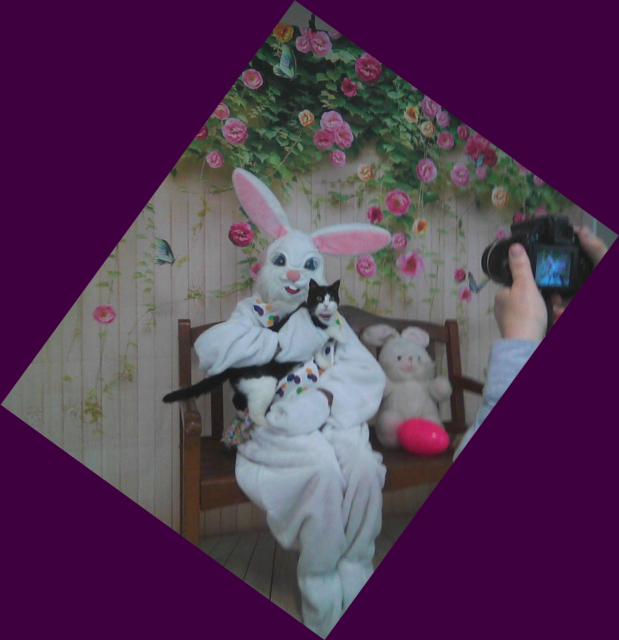 black and white cat on Easter Bunny's lap with purple border