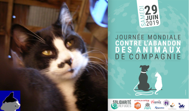 World Day against Pet Abandonmet poster with cat