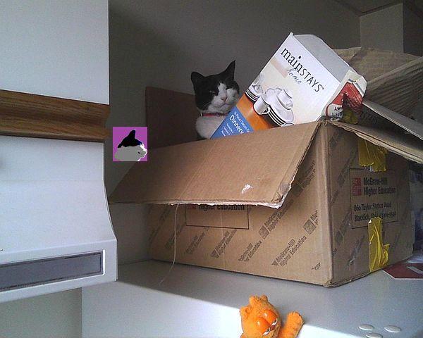 cat in box on fridge