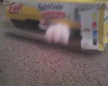 cat coming through box of waffles