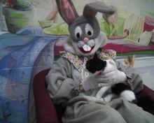 tuxedo cat trying to get down from the lap of the Easter Bunny