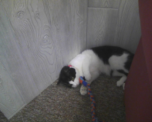 cat playing with cloth toy on ground