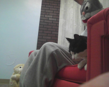 cat sitting next to Easter Bunny