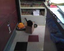 cat in box on floor looking at box