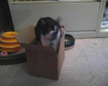 cat in box on floor looking at us