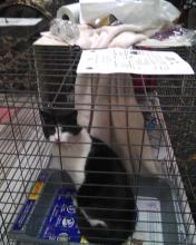 cat sitting in cage