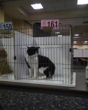 cat 161 in her cage