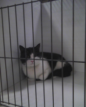 Parker sitting in cage