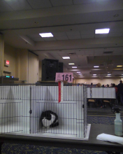Parker sitting in cage with ribbon