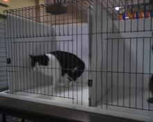 Parker in cat show cage