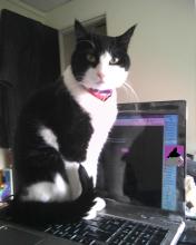 Parker Prettycat sitting on laptop