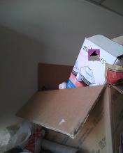 cat hiding in a box