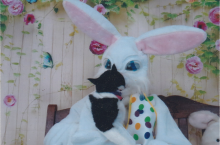 black and white cat looking at Easter Bunny