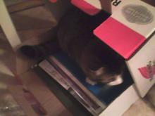 Midge in a box