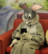 black and white cat with Easter Bunny