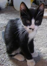 Butler Prettycat's picture
