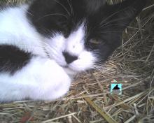 closeup of cat sleeping on hay