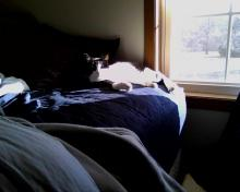 cat in sunny spot on bed