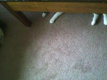 cat hiding under table
