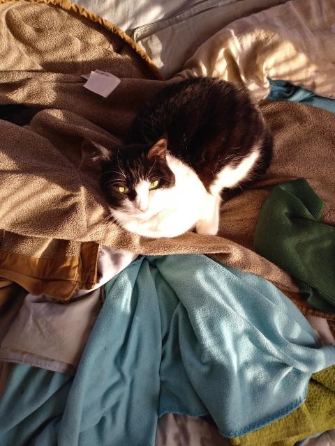 cat sitting on coat in sun